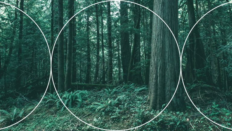 Procurement and Media Buying – Optimizing Forests, Not Trees